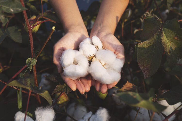 Cotton is a pure plant-based fabric.